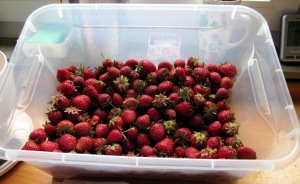 M-2015_03a - Erdbeere