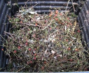 Blick in einem halb mit Grünschnitt gefüllten Thermokomposter