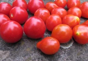 Vergleich der Tomatensorten Ruthje und Sibirisches Birnchen