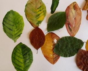 Einzelne Blätter Herbstlaub als Blätter vom Baum und als Aquarell
